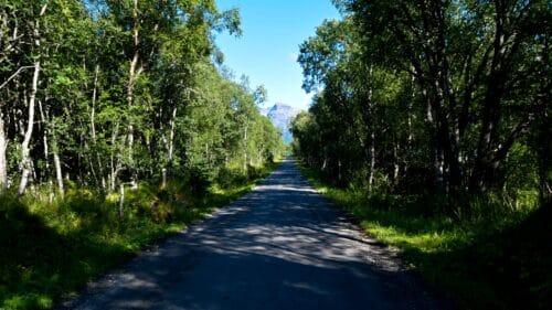 Nevelsfjordveien på Kjerringøy